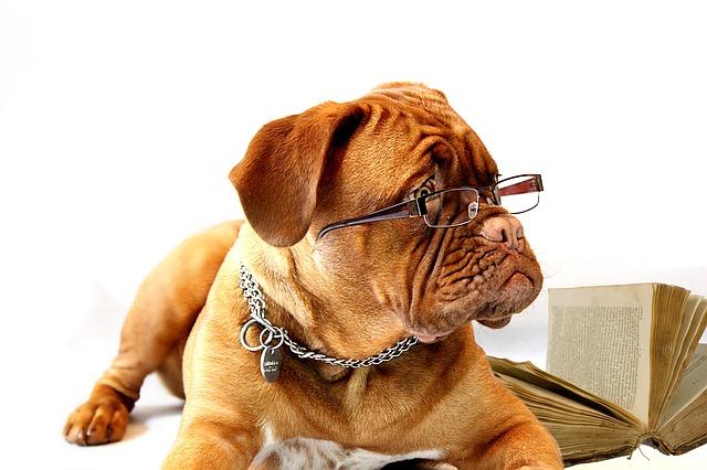 勉強している犬の写真